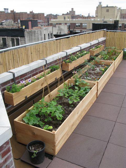 veggie container rooftop garden
