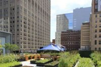 14 edible rooftop garden on the roof