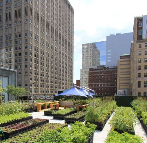 edible rooftop garden on the roof