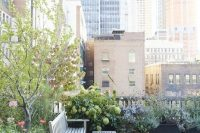 20 rooftop garden with plants in pots