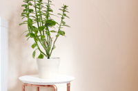 DIY plant stand with copper pipe legs