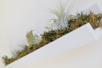 DIY Ribba ledge air plant rack