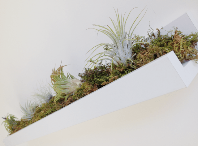 DIY Ribba ledge air plant rack (via https:)