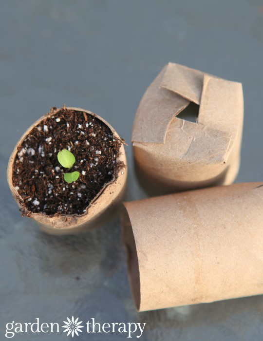 DIY seed starters from toilet paper rolls (via gardentherapy)