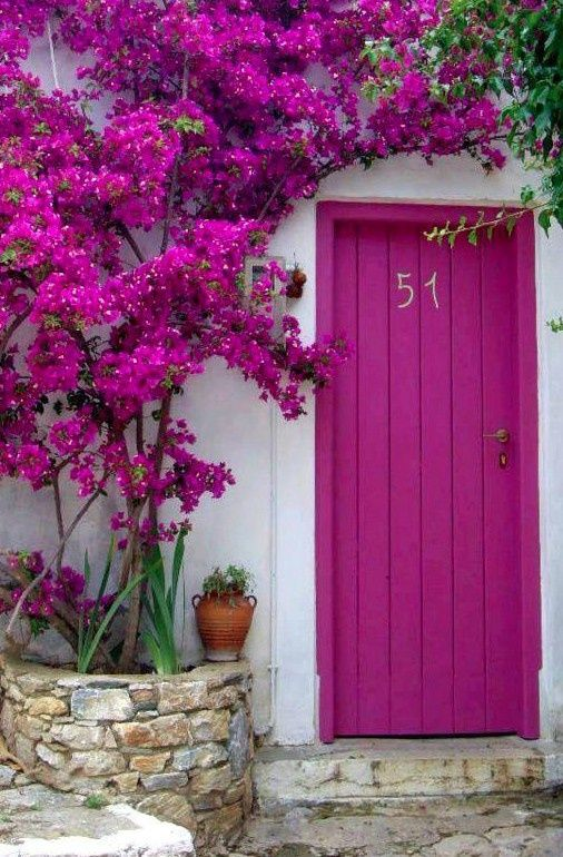 bold fuchsia front door with bougainvilleas of the same color