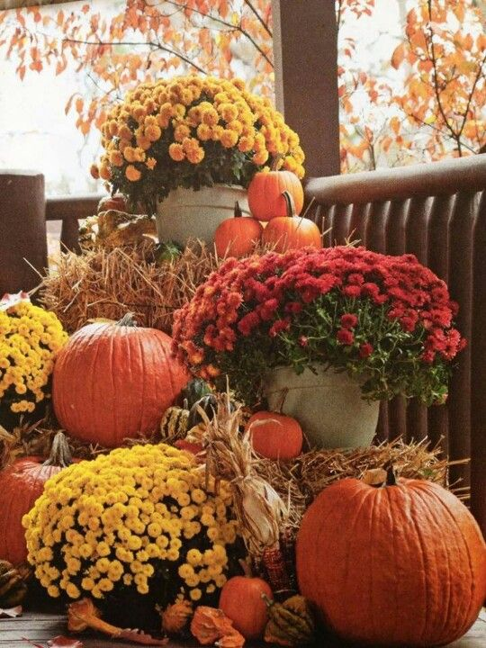bold fall flowers and pumpkins display on the porch & 25 Outdoor Fall Décor Ideas That Are Easy To Recreate - Shelterness