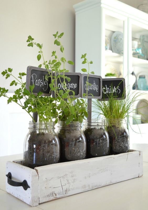 tabletop indoor herb garden
