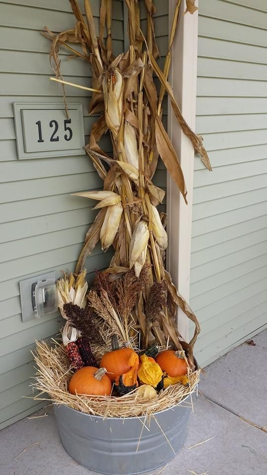 corn stalks, pumpkins, corn and hay in a bucket