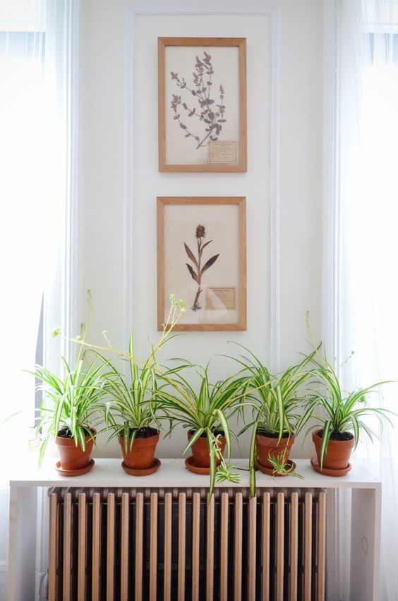 minimalist shelf put on the floor above the radiator works as a plant stand