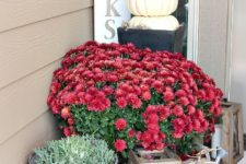 08 neutral decor with pumpkins and whitewashed container, bold red flowers