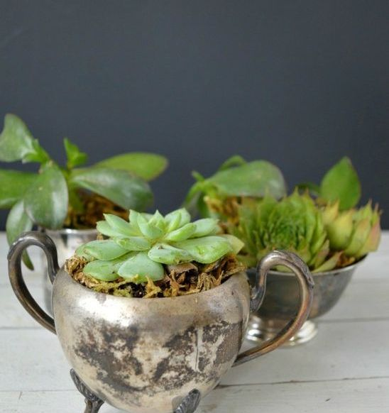 plant succulents in vintage silver sugar bowls