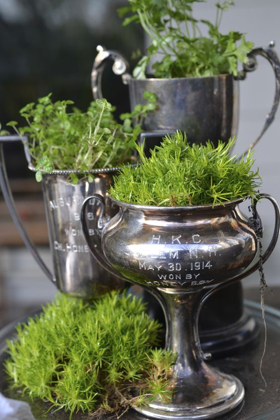 vintage trophies planted with moss