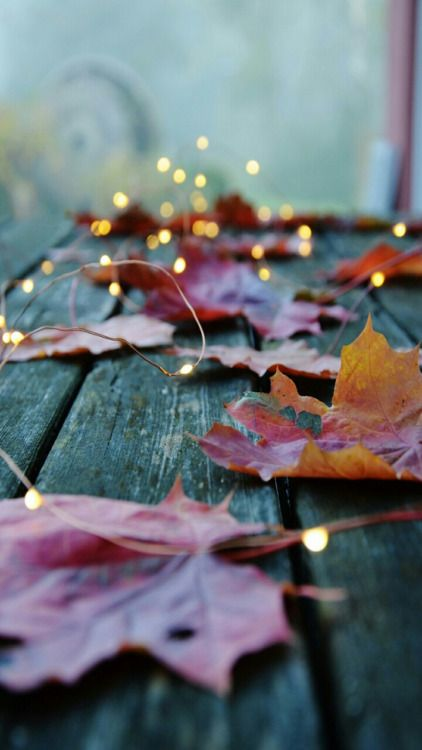 lights mixed with real fall leaves are a perfect decoration