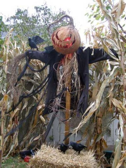 Halloween scarecrow to frighten everyon in your backyard
