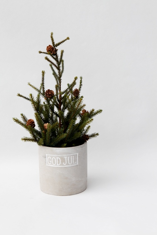 all-natural Christmas tree in a box with some pinecones
