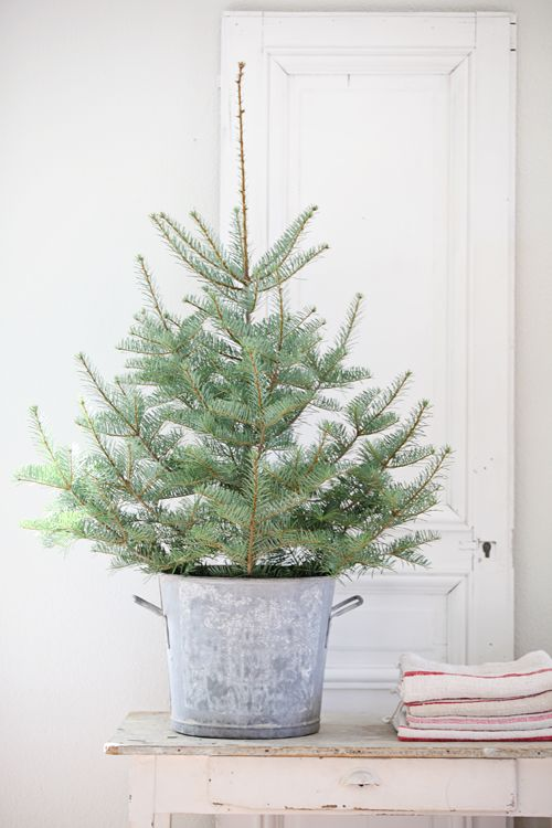 small Christmas tree in a bucket with no decor for a rustic space