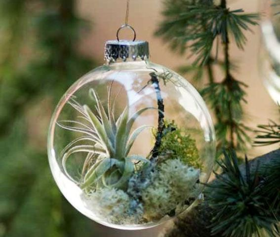 air plant ornaments as small terrariums