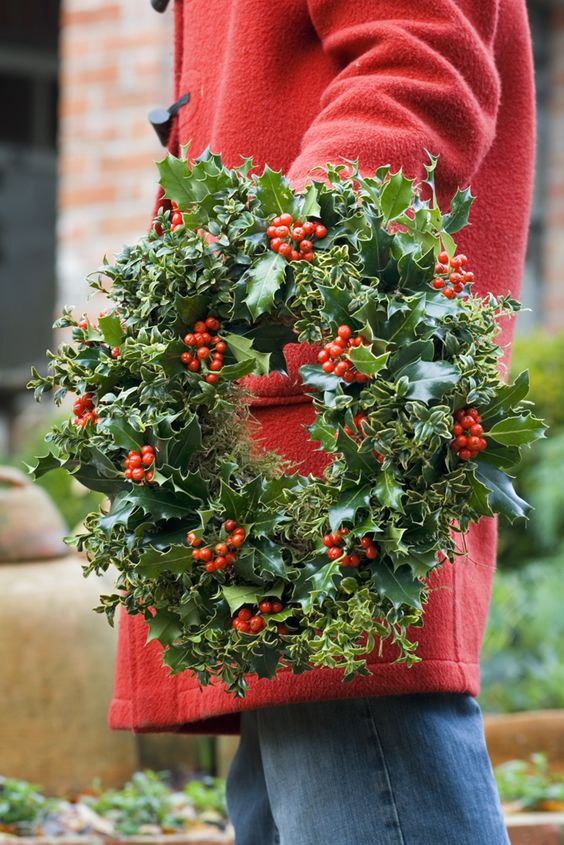 fresh holly leaves and berries and ivy wreath for holidays