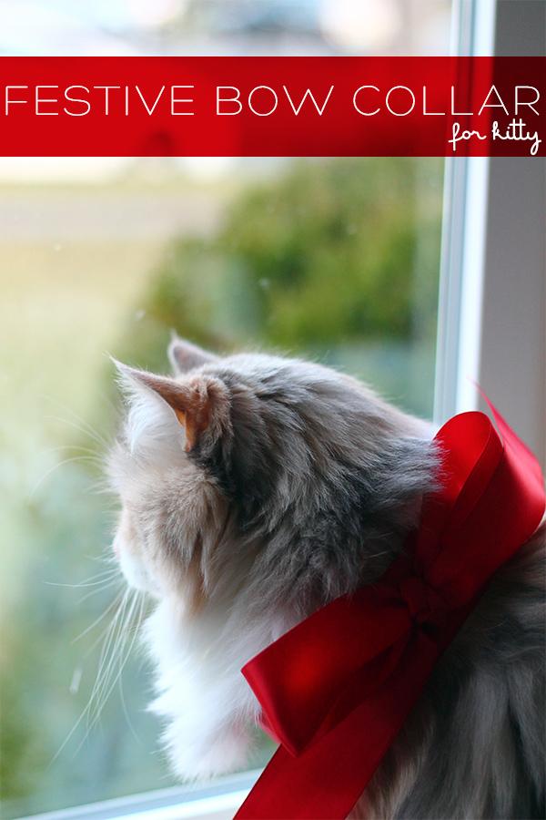 DIY festive bow collar for a cat (via squirrellyminds.com)