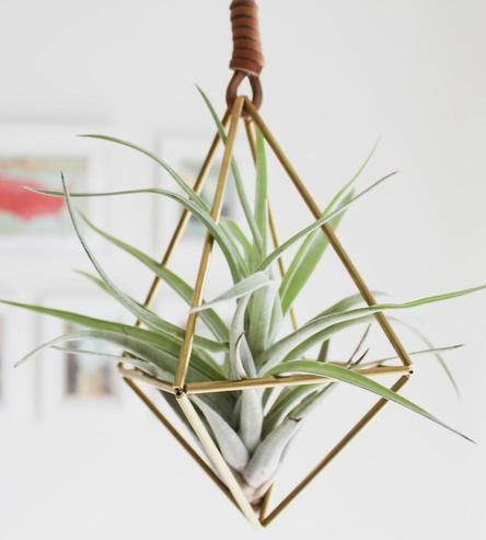 hanging himmeli air plant ornament