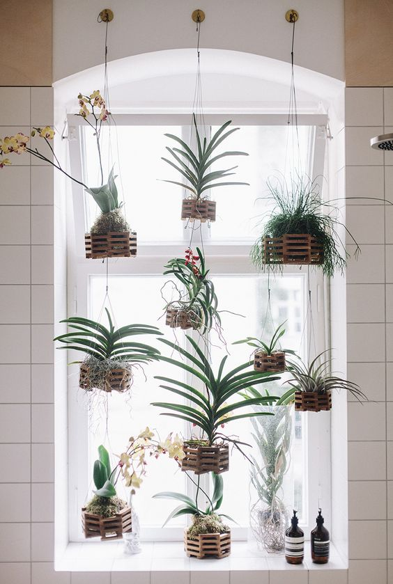 hanging wooden plank plant holders