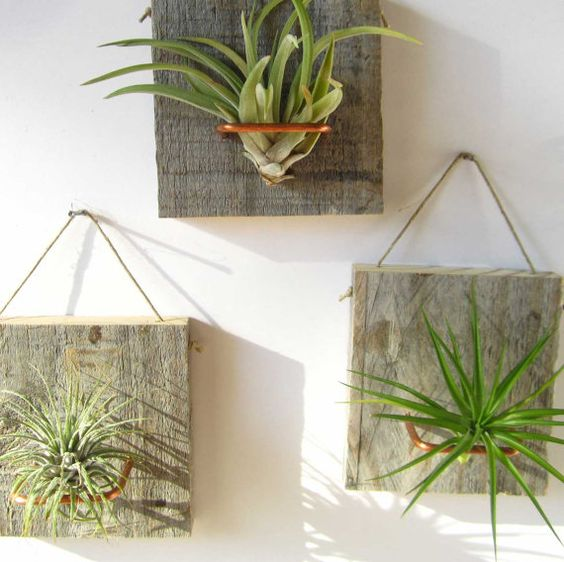 hanging boards with copper wire to display air plants
