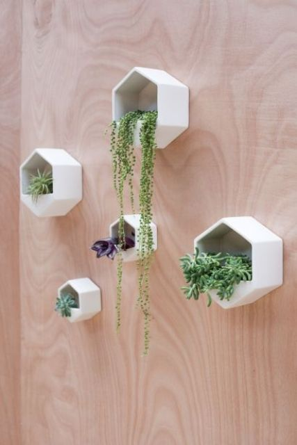 hexagon wall planters for small plants