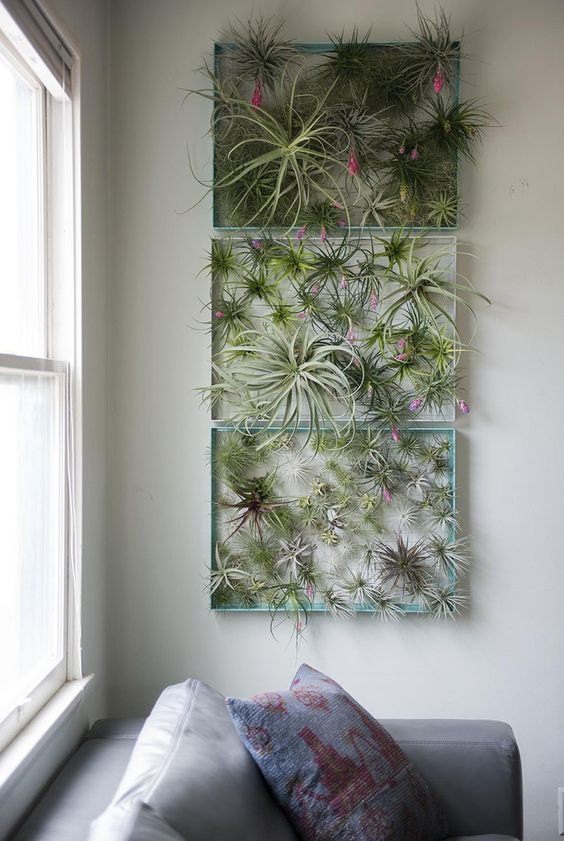 metal frames for displaying many air plants