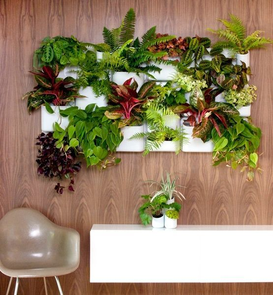 vertical planter on the wall to accomodate every plant
