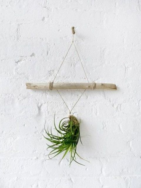 twine and a wooden stick air plant holder