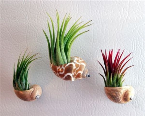 seashell planters on magnets to mount on a fridge
