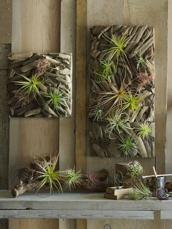 driftwood tiles with air plants
