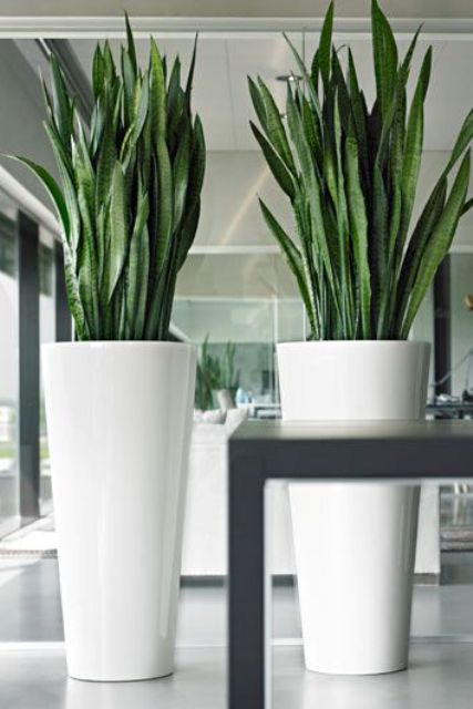 simple white large floor vases with succulents