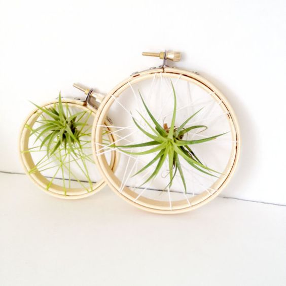 embroidery hoops with webs and air plants