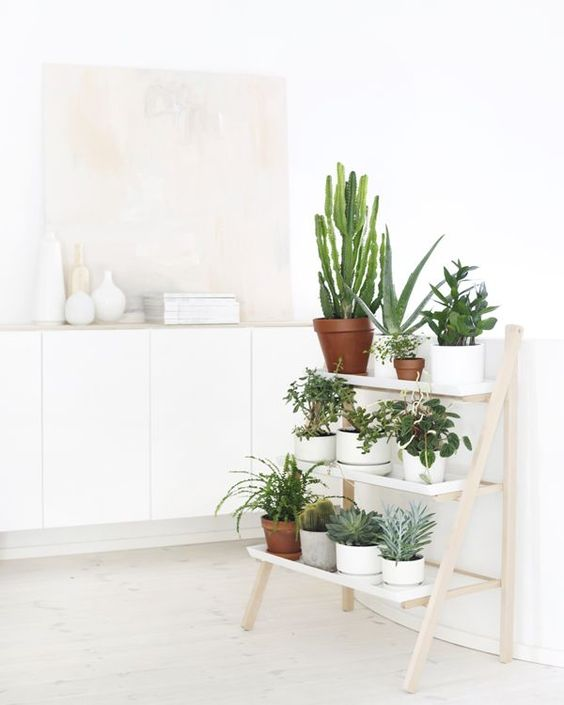 light wood ladder as a plant stand