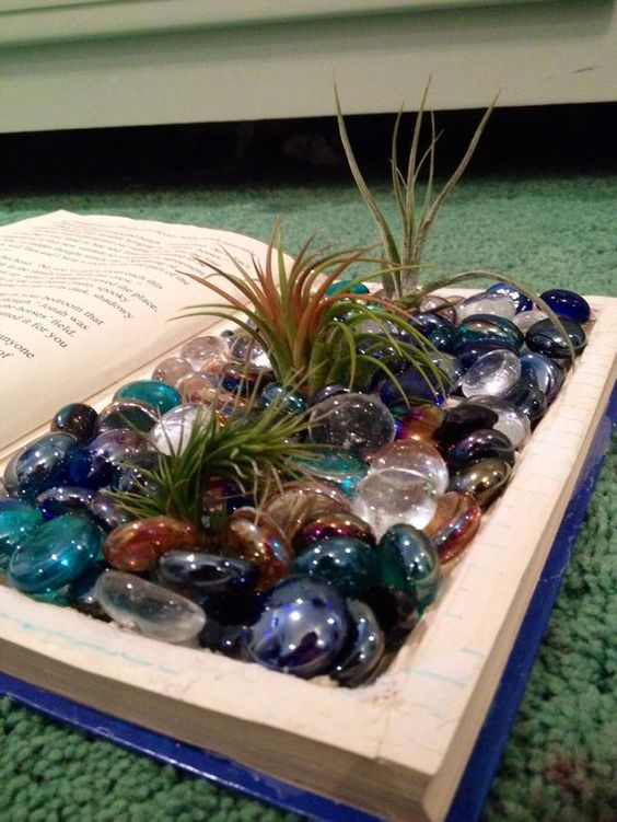 old book with glass pebbles and air plants
