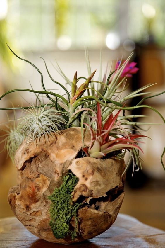 spectacular driftwood sphere with air plants