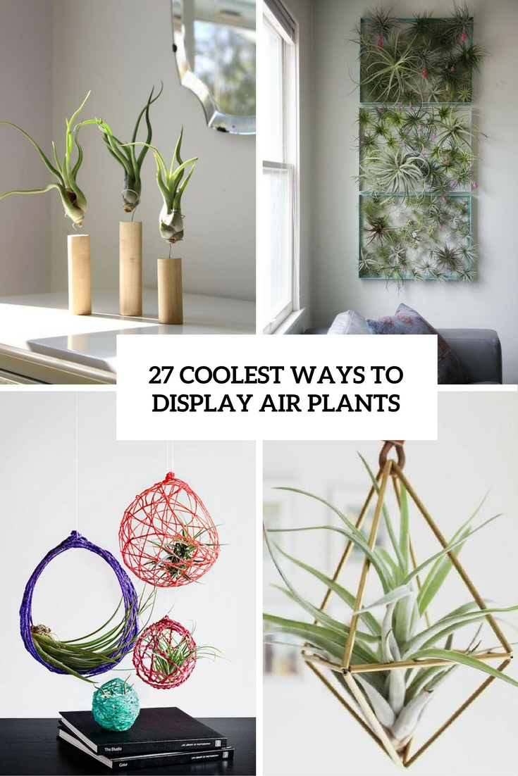 27 Coolest Ways To Display Air Plants