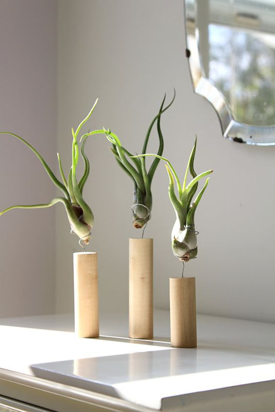 27 coolest ways to display air plants shelterness for Air plant holder ideas