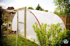 DIY trampoline greenhouse