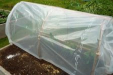 DIY  'Instant Cloche' greenhouse