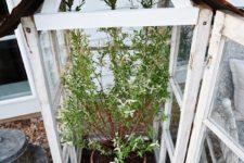 small DIY old window greenhouse