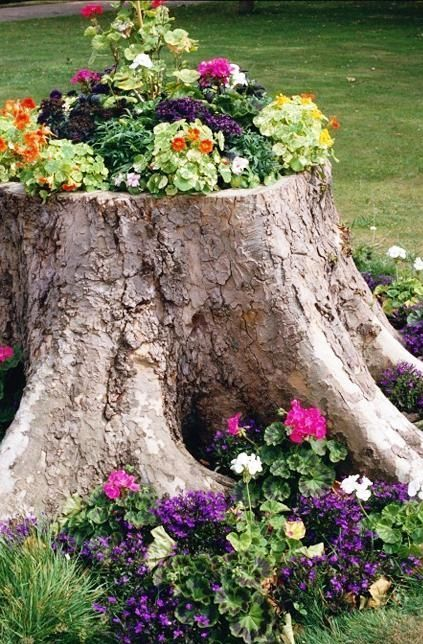 a tree stump may be turned into a cool flower bed
