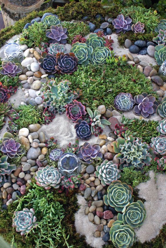 Adorable Succulent Rock Garden With Purple, Green And Grey Tones