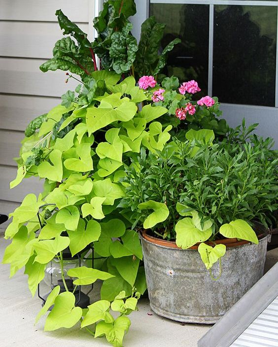 greenery in all kinds of rustic planters will remind of spring