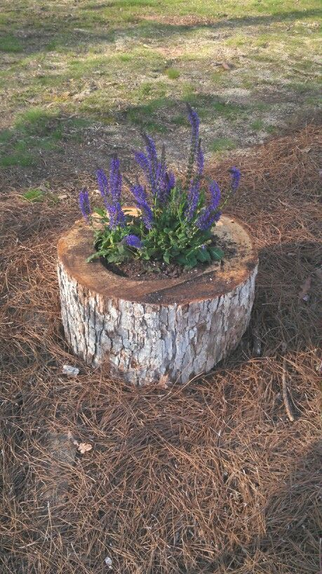 turn an old tree sutmp into a cool flower bed or planter outdoors