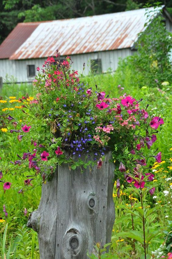 an old ugly stump can easily become a beautiful flower bed