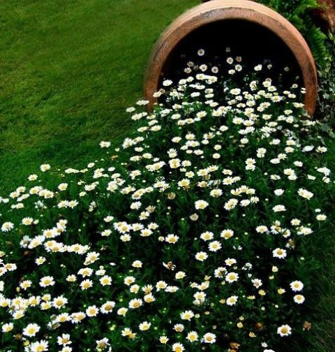 a barrel of seed tipped over to create this river bed of flowers