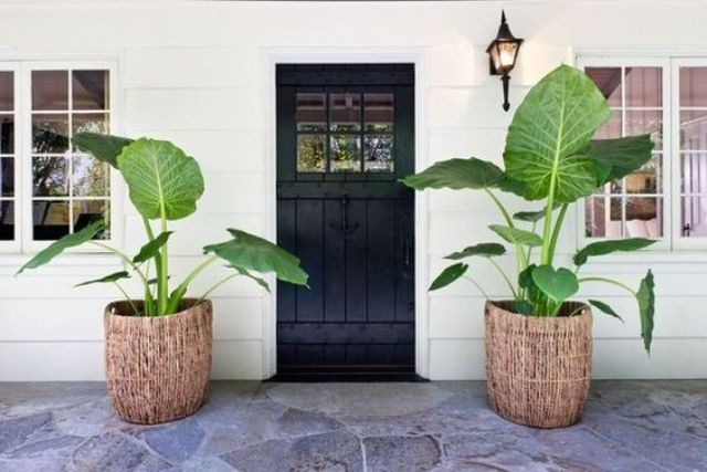 beachside home with a black door and elephant ears in wicker planters