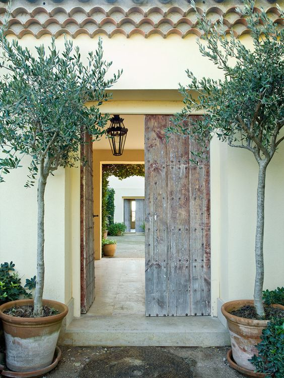 Mediterranean Entrance With A Reclaimed Wood Door And Olive Trees In Simple  Pots